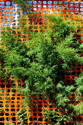 Gebüsch durch Bauzaun - p248m898661 von BY