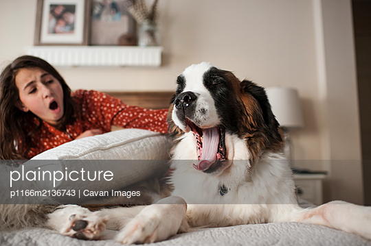 Dog and young girl yawning at the same time sitting on bed at home - p1166m2136743 by Cavan Images