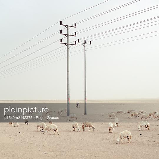 Schafherde und Überlandleitung in der Wüste - p1542m2142375 von Roger Grasas