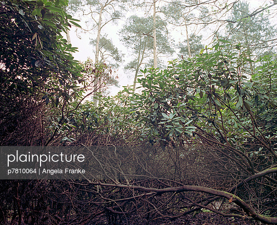 Dschungel - p7810064 von Angela Franke