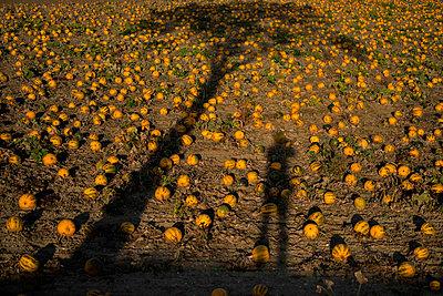 Melonen - p229m1492012 von Martin Langer