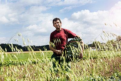 Farmer carrying basket full of vegetables in organic farm - p429m1135581 by Ingolf Hatz
