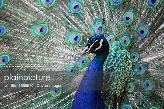 p1166m1555510 von Cavan Images