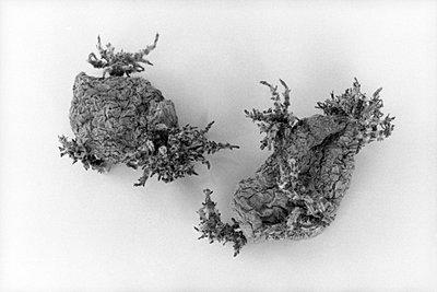 Kartoffeln - p4170104 von Pat Meise