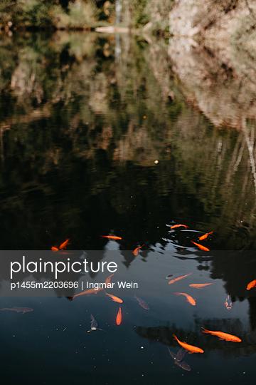 p1455m2203696 by Ingmar Wein