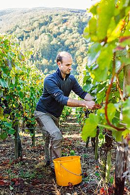 Im Weingebiet - p1271m1539692 von Maurice Kohl