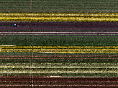Aerial view of various crops in agricultural field, Stuttgart, Baden-Wuerttemberg, Germany - p301m1406247 by Stephan Zirwes