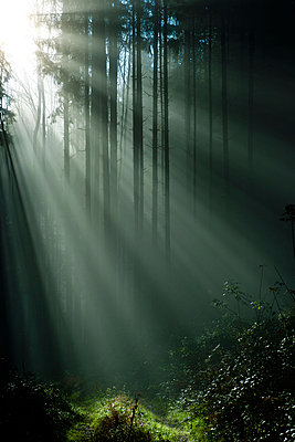 Sonnenstrahlen im Wald - p533m955726 von Böhm Monika