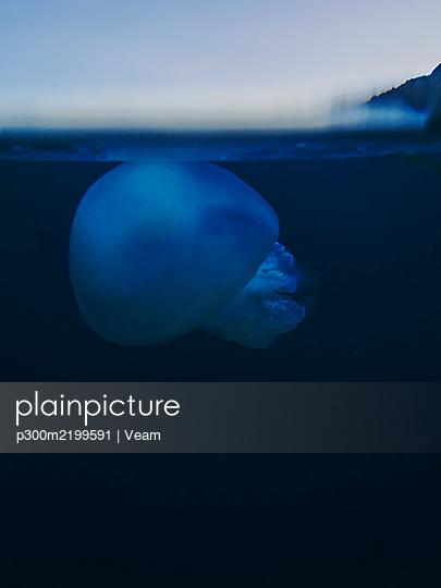 Spain, Catalonia, Cap de Creus, Jellyfish underwater - p300m2199591 by Veam