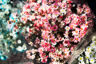 Blumen - p1271m1590338 von Maurice Kohl