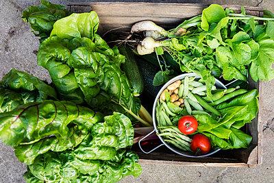 Germany, Box of freshly harvested vegetables - p300m2198155 by Eva Gruendemann