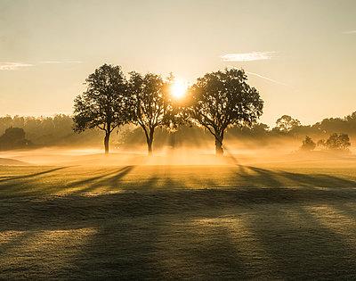 Sunrise on a golf course - p343m1018538 by Sasha Maslov