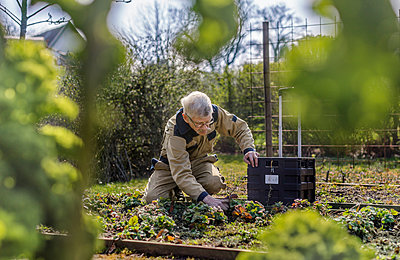 Man gardening - p312m2139557 by Pernille Tofte