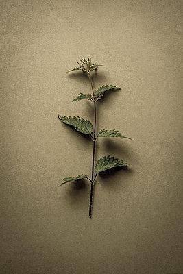 Garden weeds - p1228m1461187 by Benjamin Harte