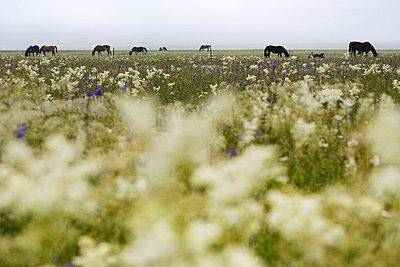Flower field - p26813369 by Rudi Sebastian