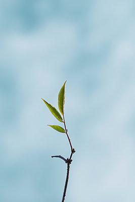 Green leaves - p1228m2222530 by Benjamin Harte