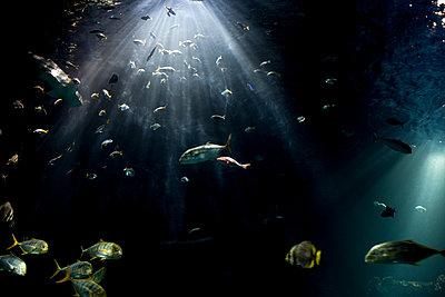 Aquarium - p1263m1067988 by Tomas Engel