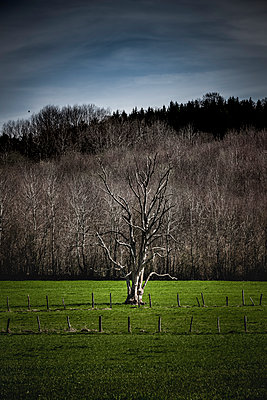 Kahler Baum vor Wald - p248m1225836 von BY