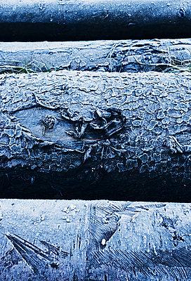 Frost - p318m901435 von Christoph Eberle