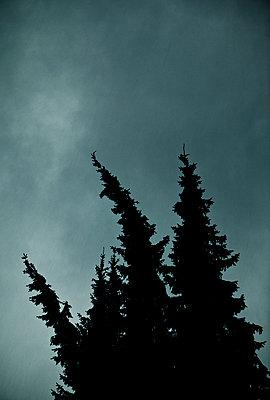Bäume im Sturm - p1221m1025754 von Frank Lothar Lange