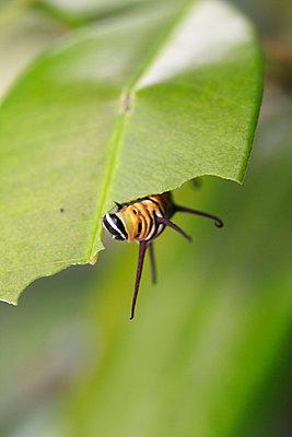 Butterfly - p1790584 by Roland Schneider