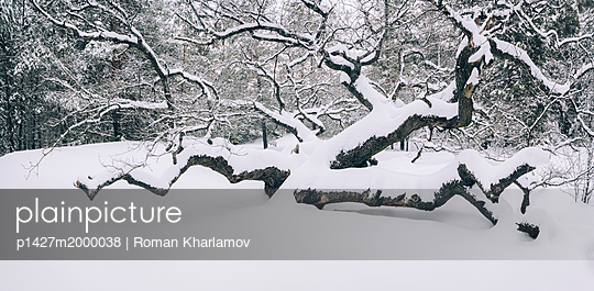 p1427m2000038 von Roman Kharlamov