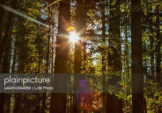 p442m2004089 von LJM Photo