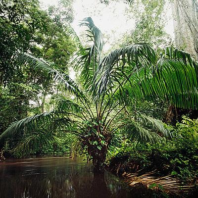 Los Guatuzo, Nicaragua - p844m880791 by Markus Renner