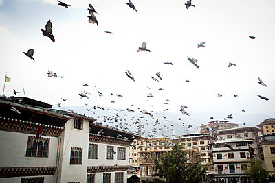 Flock of birds flying over Thimphu, Bhutan, Asia - p934m1177321 by Aidan Dockery