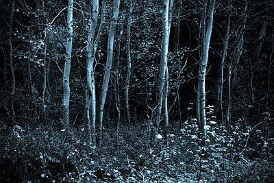 Wald in der Rheinaue - p979m1444904 von Martin Kosa