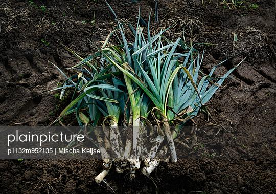 Harvesting leek - p1132m952135 by Mischa Keijser
