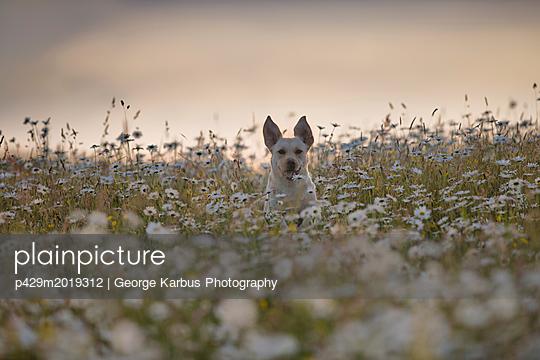 p429m2019312 von George Karbus Photography