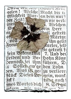 Vierblättrig - p4510856 von Anja Weber-Decker