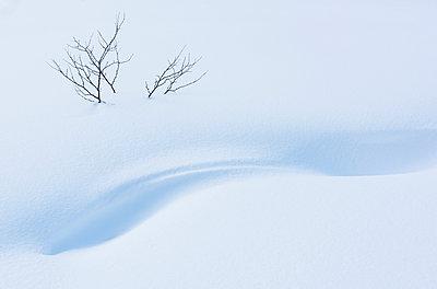 Äste eines Baumes im Schnee - p816m1032207 von Jensen, Kai