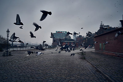 Germany, Hamburg, Fish market at dawn - p1198m2278299 by Guenther Schwering