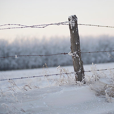 A Barbed Wire Fence In The Snow In Winter - p44211463f by Keith Levit