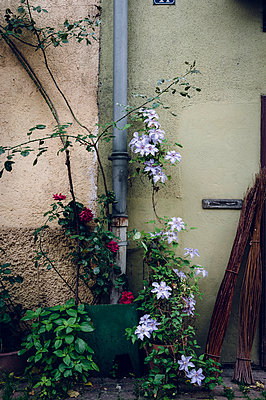 Rose and clematis - p1088m907730 by Martin Benner