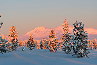 Winter landscape at sunset - p312m1570520 by Mikael Svensson