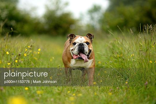 p300m1153776 von Mark Johnson