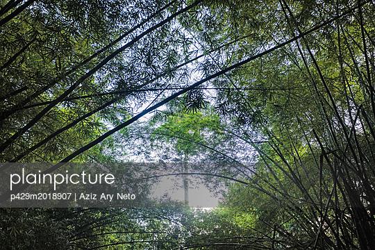 p429m2018907 von Aziz Ary Neto