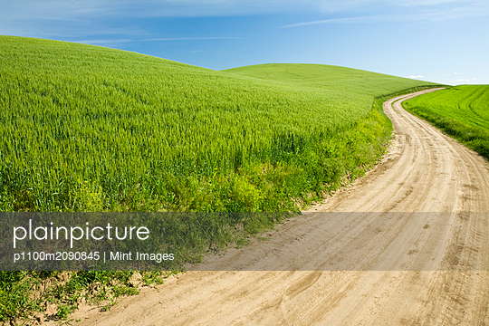 Dirt Road Through Field, Palouse, Washington - p1100m2090845 by Mint Images