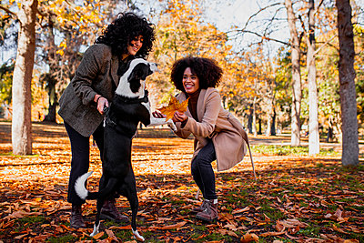 Smiling friends playing with dog while standing at park - p300m2243905 by Manu Reyes