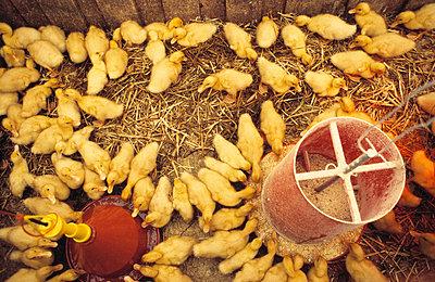 Wood duck - p2002105 by Alain Dumas