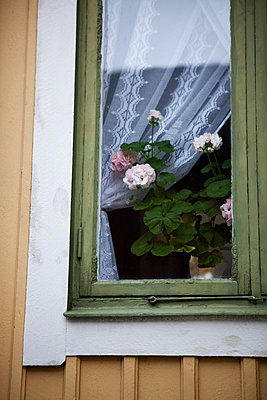 Potted flowers on windowsill - p312m800505f by Lena Koller