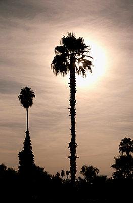 Sunrise with palm trees - p382m1171595 by Anna Matzen