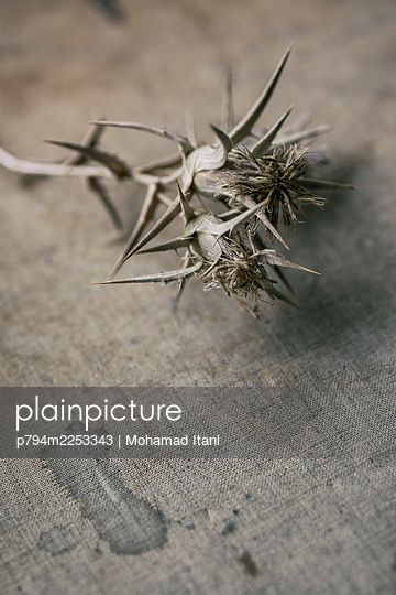 Dry flowers with thorns  - p794m2253343 von Mohamad Itani