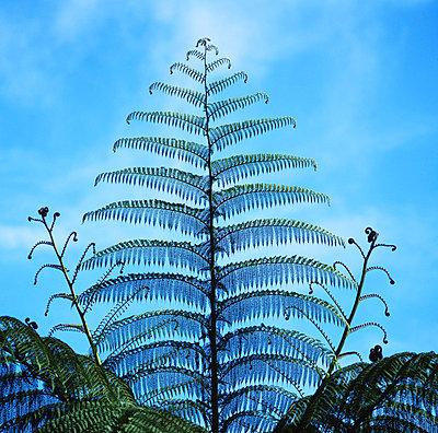 Tree fern - p1016m767003 by Jochen Knobloch