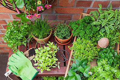 Various potted spice plants on terrace - p300m2080071 by Gaby Wojciech