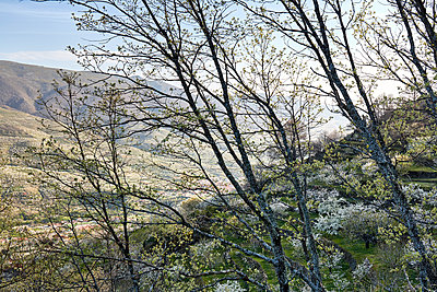 Cherry blossom in Jerte valley - p719m1563582 by Rudi Sebastian