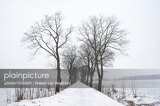 A snow covered road road lined by trees near Starbienino, Poland.